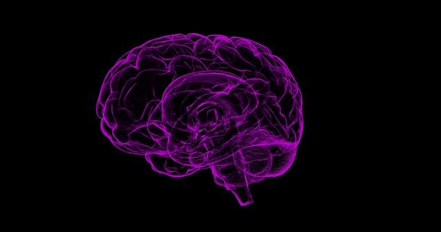 brain-1787622_640